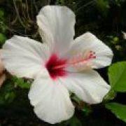 Ríša exotických rastlín v Kew Gardens