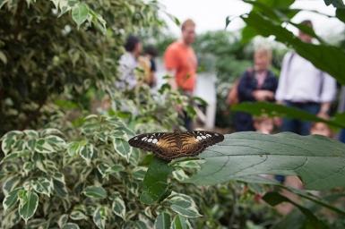 vystava-motylov-v-prirodovednom-muzeu-3.jpg